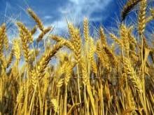 Intermediazione cereali