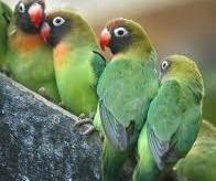 Intermediazione prodotti ornitologici