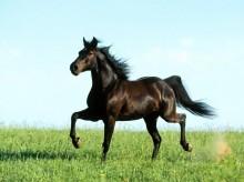 Intermediazione prodotti per cavalli